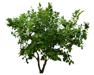 Bushes Transparent Background PNG Images