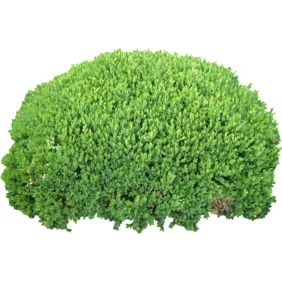 Bushes Icon Clipart PNG Images