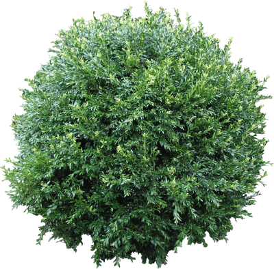 Top Bushes High Quality PNG PNG Images