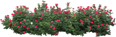 Bushes PNG Icon PNG Images