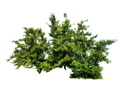 Bushes Free Download Transparent PNG Images