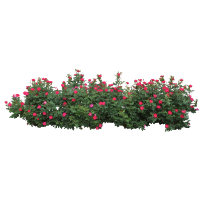 Bushes HD Image PNG Images