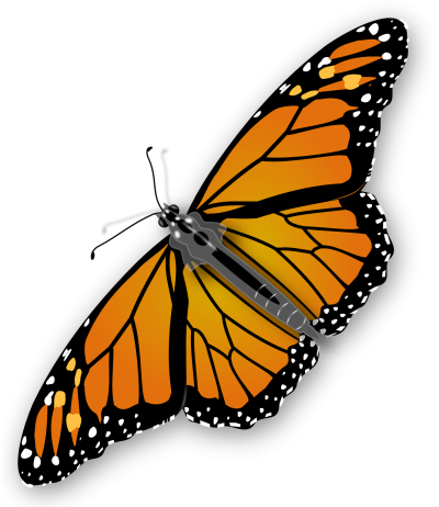 Butterfly PNG PNG Images