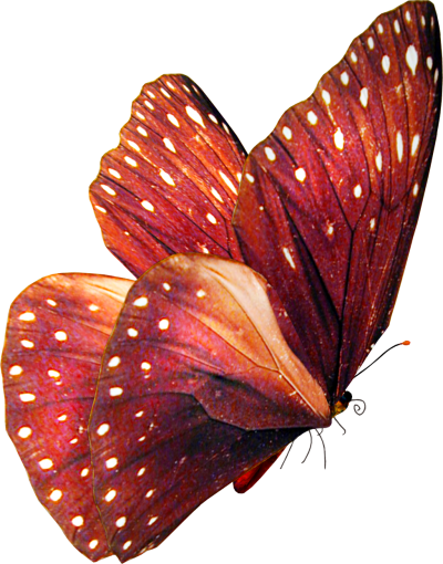 Beautiful Pink Butterfly, Put, Design, Arrangement PNG Images