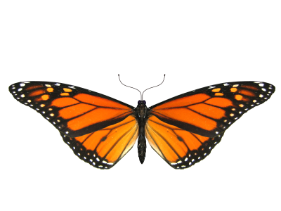 Wide Angle Butterfly Transparent, insects, Flight, Petal PNG Images