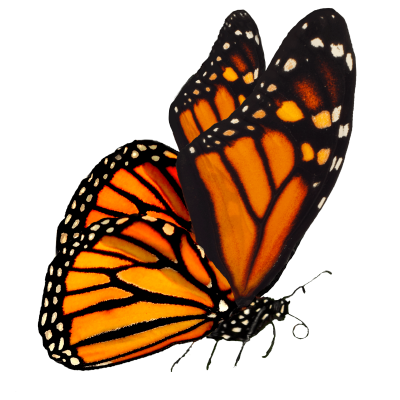 Orange Butterfly Photo, Grass, Tree, Branch, Landing PNG Images