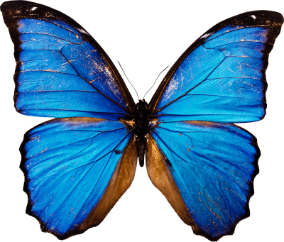 Decorative Colorful Butterfly PNG HD Download, Leaf, Variety, Cocoon PNG Images