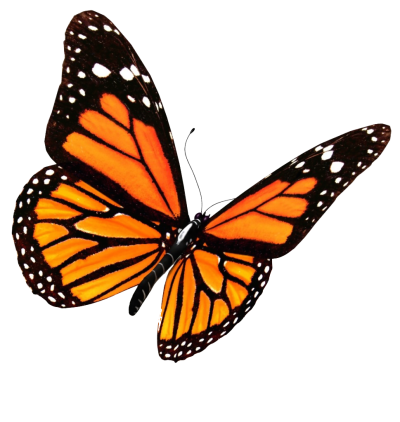 Orange Flying Butterfly Picture, Black Pattern, Flowers PNG Images