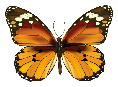 Yellow Butterfly Clipart PNG Images