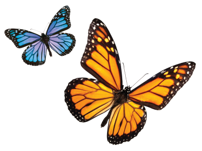 Yellow And Blue Patterned Butterfly Pictures, Fly, Beauty, Plant, Flower, Land PNG Images
