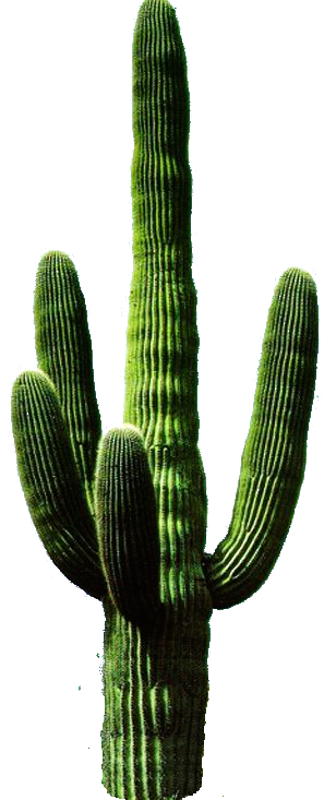 Cactus Free PNG PNG Images