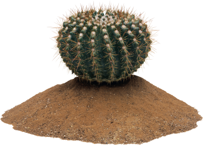 Cactus Picture PNG Images