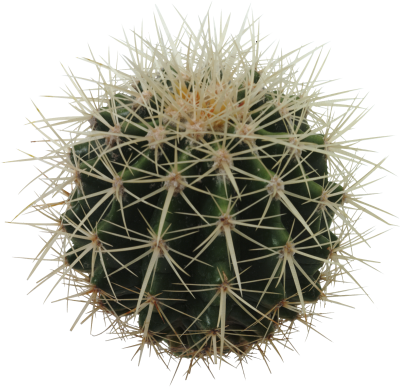 Download Cactus PNG PNG Images