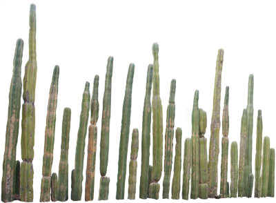 Cactus PNG Picture PNG Images