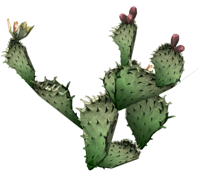 Cactus Clipart PNG Photos PNG Images