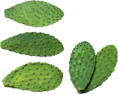Cactus Background PNG Images