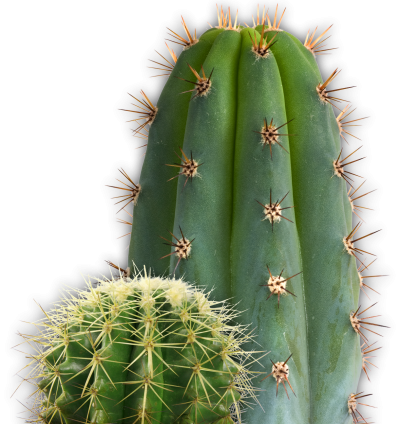 Cactus Clipart PNG File PNG Images
