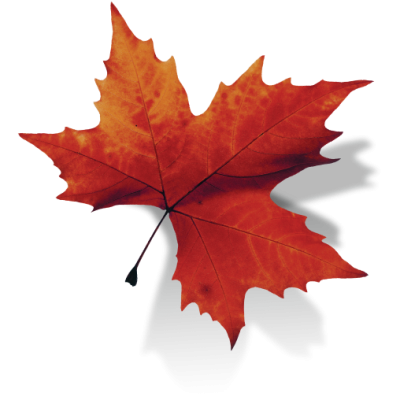Moving Business Through Emotional Brands Canada Leaf Png