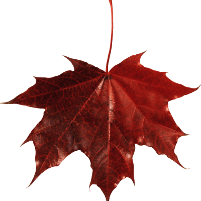 New Maple Leaf Canada Transparent PNG Images
