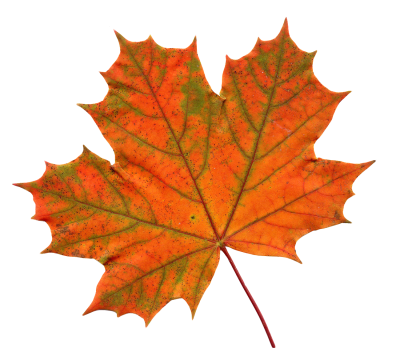 Old Maple Leaf Png Transparent Images