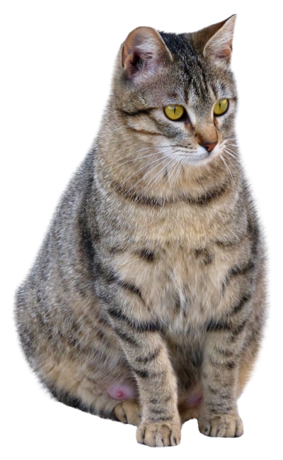 Cat PNG Icon PNG Images