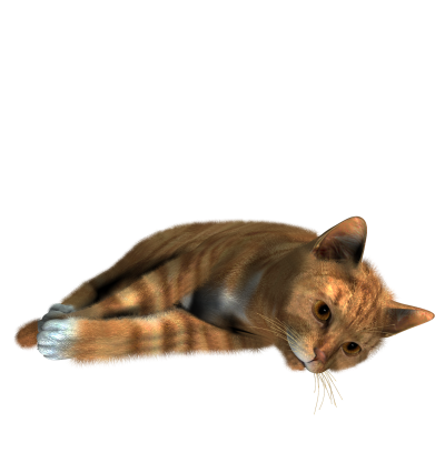 Cat Clipart PNG Photos PNG Images
