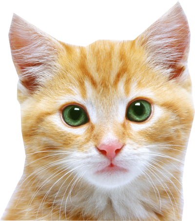 Cat Png PNG Images