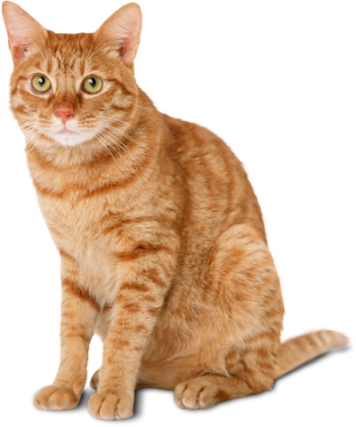 Cat Wonderful Picture Images PNG Images