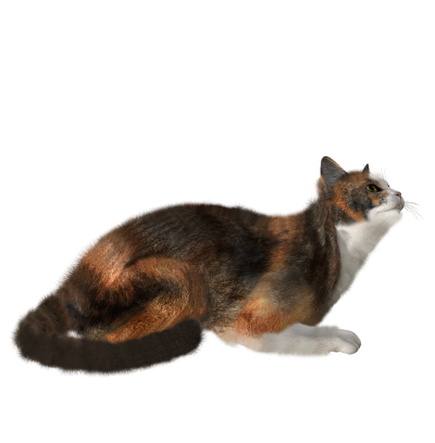 Cat Free Transparent Png PNG Images