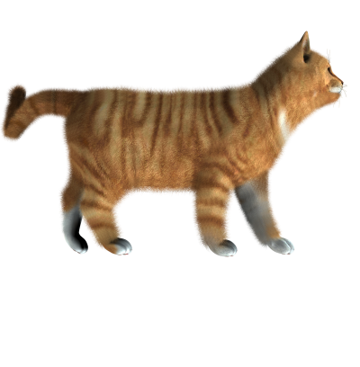 Cat HD Image PNG Images