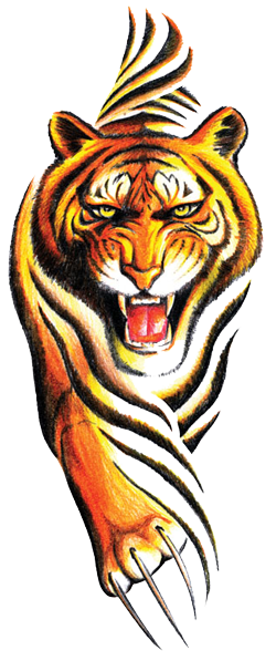 Tribal Tiger Tattoos Designs Png