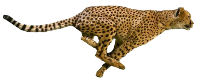 Cheetah Running, Speed Animals Png PNG Images