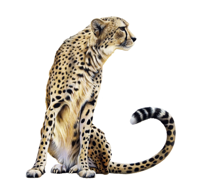 Cheetah Clipart Photos PNG Images