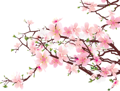 Cherry Blossom HD Image PNG Images