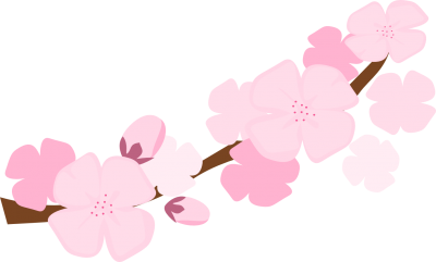 Cherry Blossom Wonderful Picture Images PNG Images
