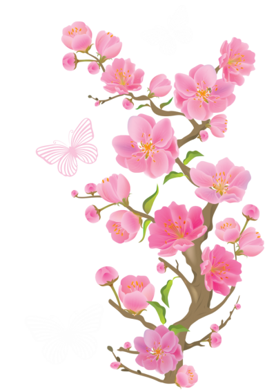 Cherry Blossom Free Transparent Png PNG Images