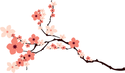 Cherry Blossom Background PNG Images