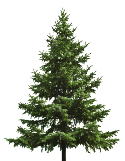 Christmas Tree Photos PNG Images