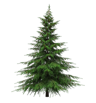 Christmas Tree Transparent PNG Images