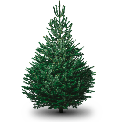 File Christmas Tree Clipart PNG