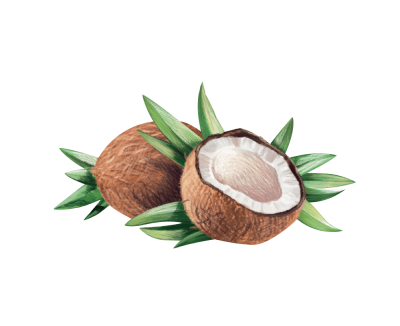 Coconut Clipart PNG File PNG Images