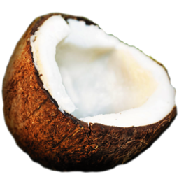 Coconut HD Photo Png PNG Images