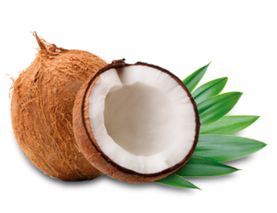 Coconut Vector PNG Images