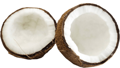 Coconut Free Download PNG Images