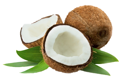 Coconut HD Image PNG Images