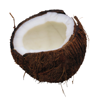 Coconut Picture PNG Images