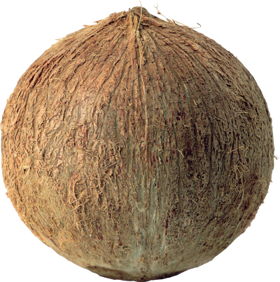 Coconut Amazing Image Download PNG Images