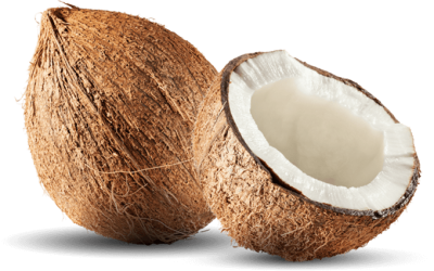 Coconut Photos PNG Images
