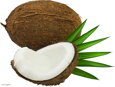 Coconut Free Cut Out PNG Images