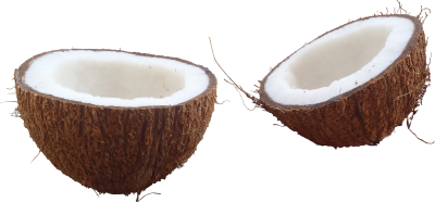 Coconut Png PNG Images